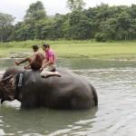 mit Elefanten baden