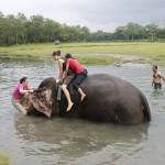 Spiel mit dem Elefanten