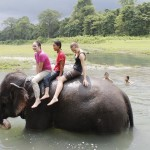 auf dem Rücken des Elefanten