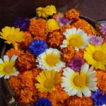 Blumen am Hotel